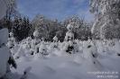 ZH-Hoenggerberg_Winter141231104300