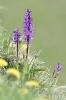 Orchidee150512112034
