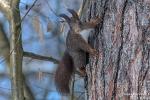 Eichhörnchen180302094830