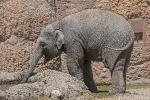 Elefant_Ind180626120837